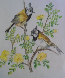 Arvind's work